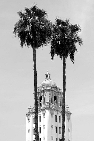 City Hall Palms